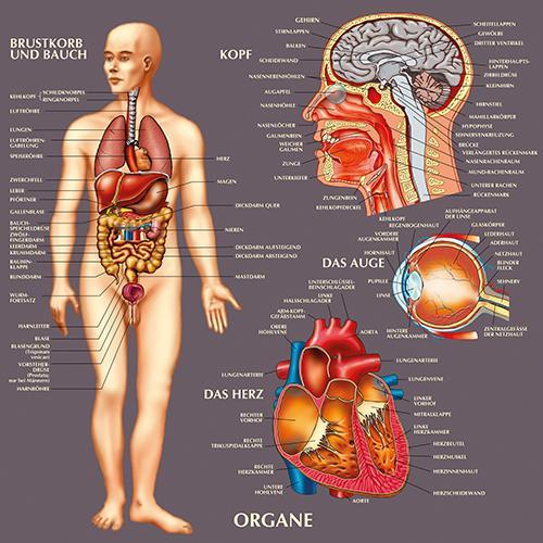 Wissen für Kinder - Anatomie | HCM-Kinzel
