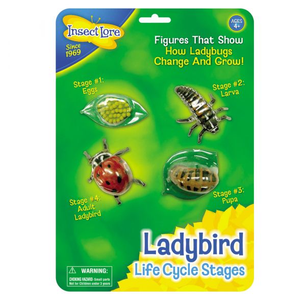 Ladybird Life Cycle Stages